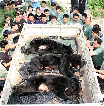 Citizens in China rescue bears from a bear bile farm (photo from http://endbearbilefarming.blogspot.com/)