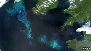 Algal blooms can be imaged from space