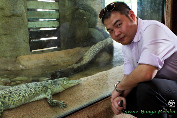 Henry and the little croc in Melaka Crocodile Park