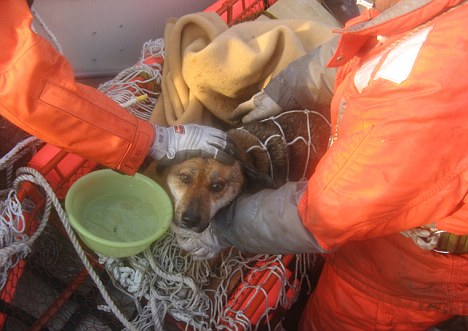 A fishy tale: It seems almost too good to be true, but this little dog seems to have survived against all odds and was discovered by coastguards floating on a raft at sea
