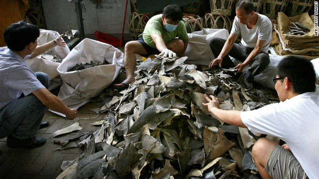 Workers prepare shark fins for sale in Hong Kong on September 1, 2007. Almost 80% of Hong Kongers now consider it socially acceptable to leave shark fin soup off the menu. (image by AFP/Getty Images)