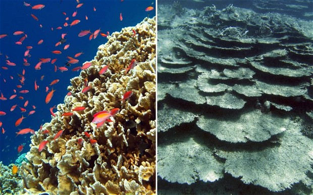 Coral bleaching caused by higher sea temperatures wreaked havoc across the Coral Triangle (photo by AFP/Getty Images/Reuters)
