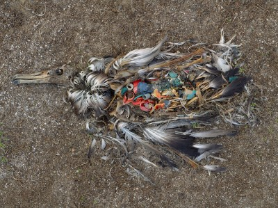 Chris Jordan's photographs of bird carcass with stomach full of plastic.