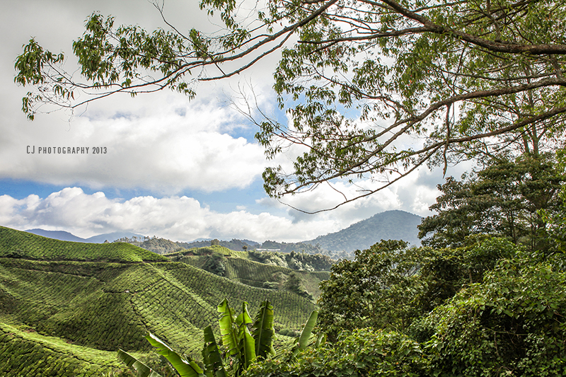 view of Boh Tea Plantations, Cameron Highlands