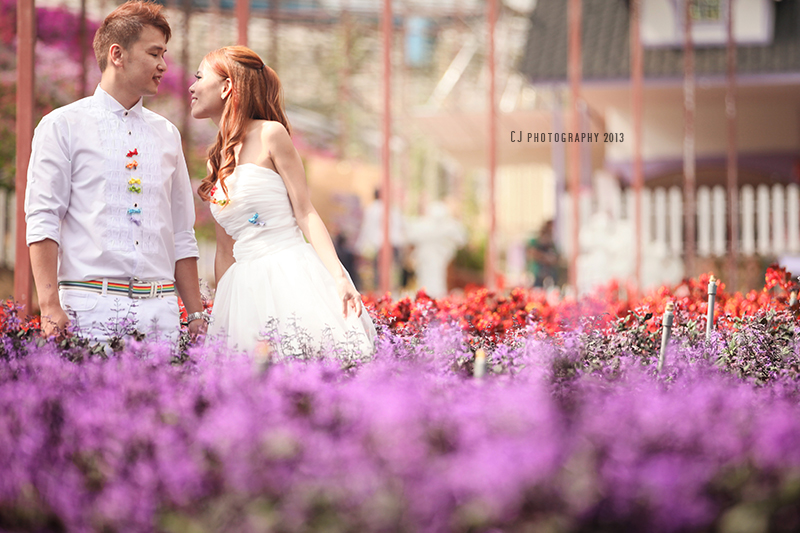 Lavender Garden, Cameron Highlands prewedding