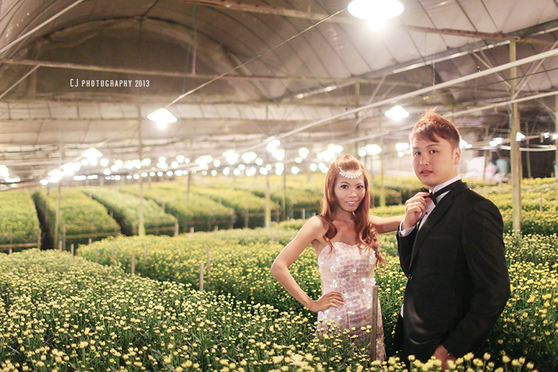 Chrysanthemum Farm in Cameron Highlands prewedding